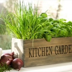 Ideal Kitchen Garden Ideas for Beginners
