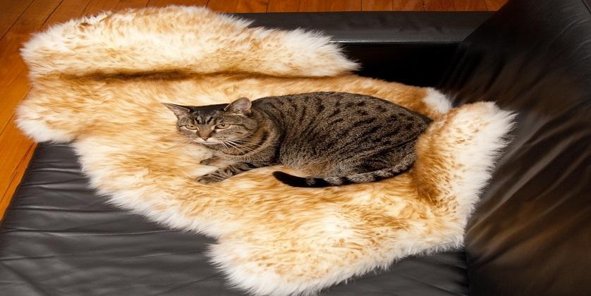 pet rugs